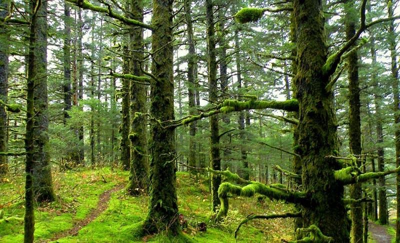 Alimestan Forest (2).jpg
