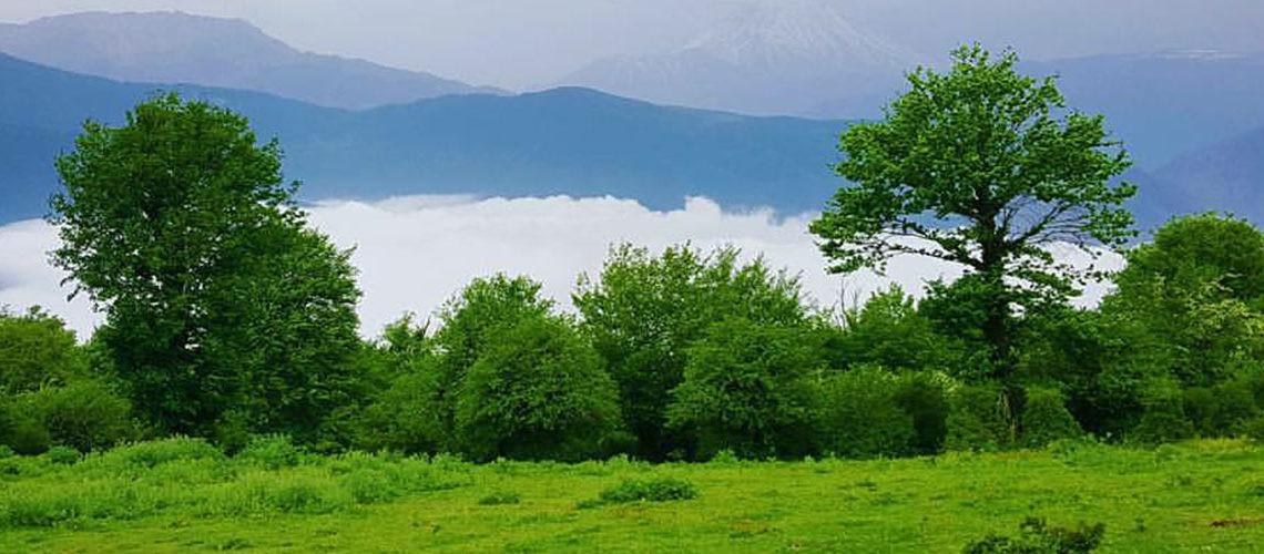 Alimestan Forest (5).jpg