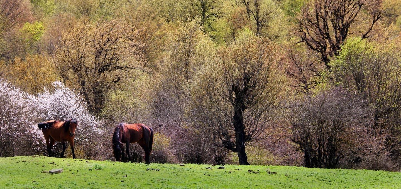 Alimestan Forest (1).jpg