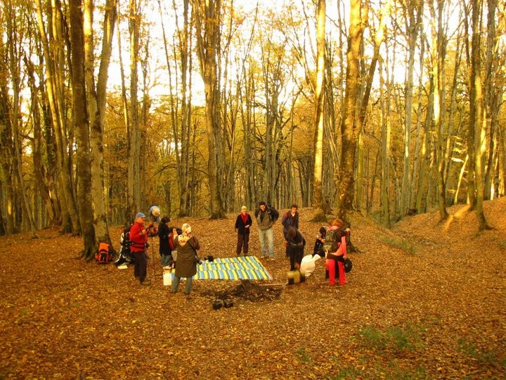 Alimestan Forest (3).jpg