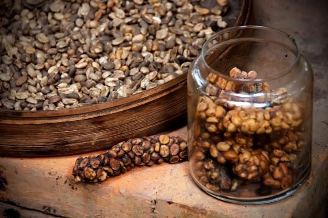 کوپی لواک، گرانترین قهوه دنیا که از فضله تهیه می شود