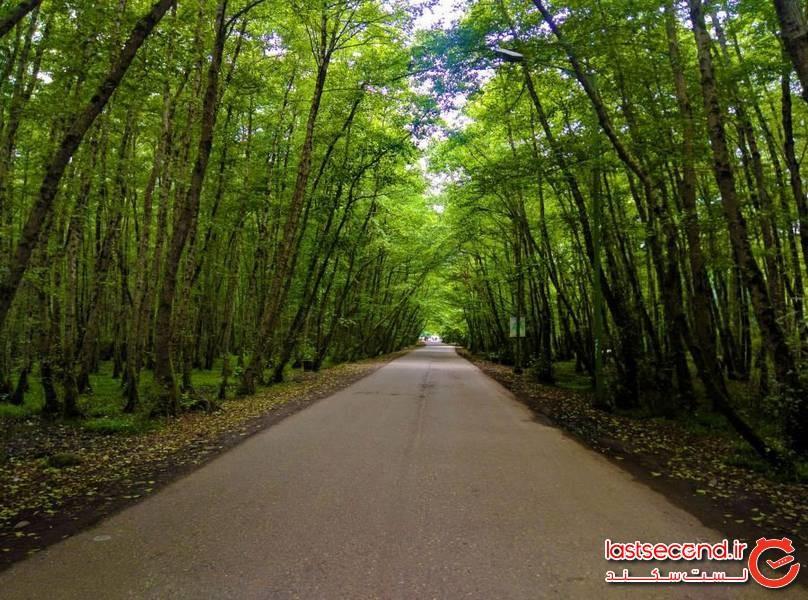 جنگل گیسوم، زمردبی نظیر تالش