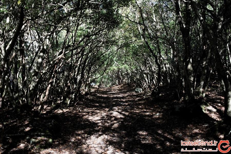جنگل آکیگاهارا
