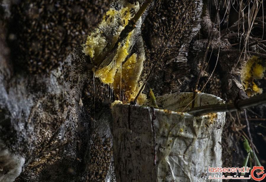 Honey-Hunting-11.jpg