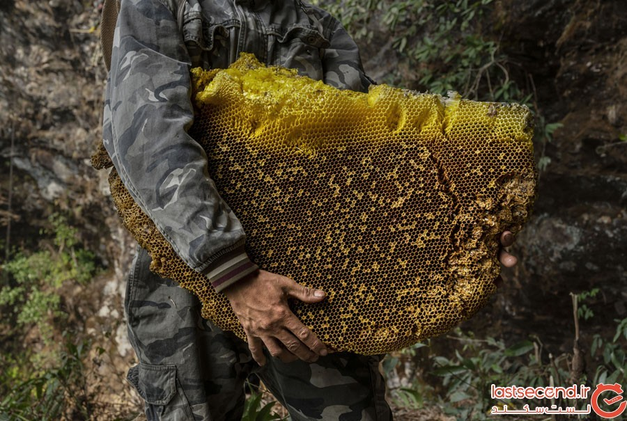 Honey-Hunting-13.jpg