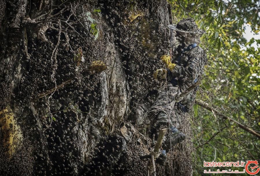 Honey-Hunting-12.jpg