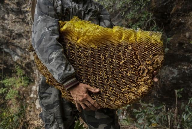 گزارش تصویری از جمعآوری عسل از صخرههای ایالت یونان در چین
