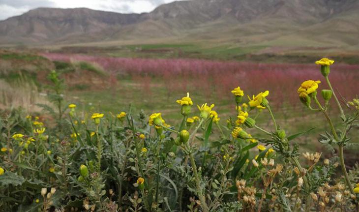 منطقه حفاظت شده ملوسان، زیباترین منطقه ممنوعه ایران