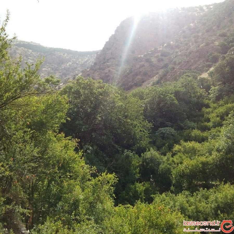 منطقه حفاظت شدهی بوزین و مرخیل