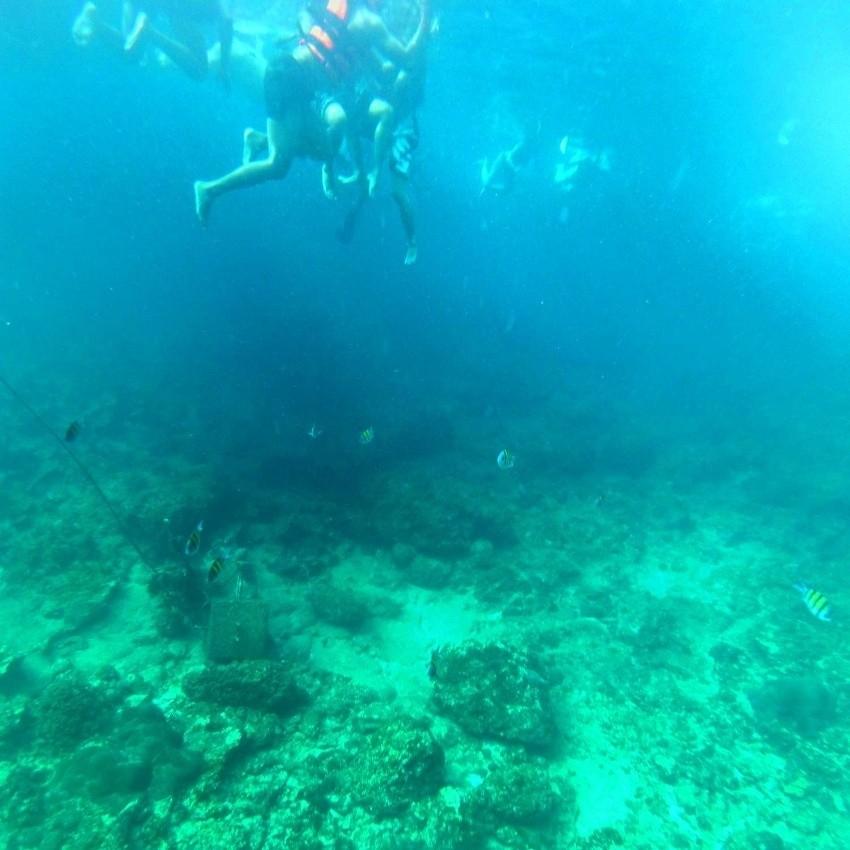 Phi Phi Islands Snorkeling Tour.jpeg