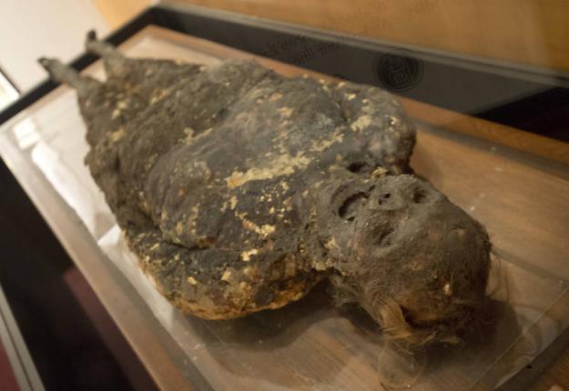 عجیب و غریب ترین نمونه های دنیا در موزه موتر آمریکا