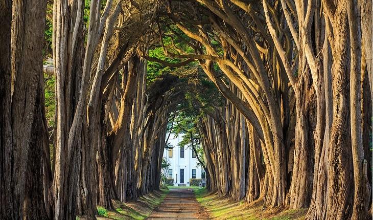 زیباترین تونل های درختی جهان در چه مناطقی قرار دارند؟