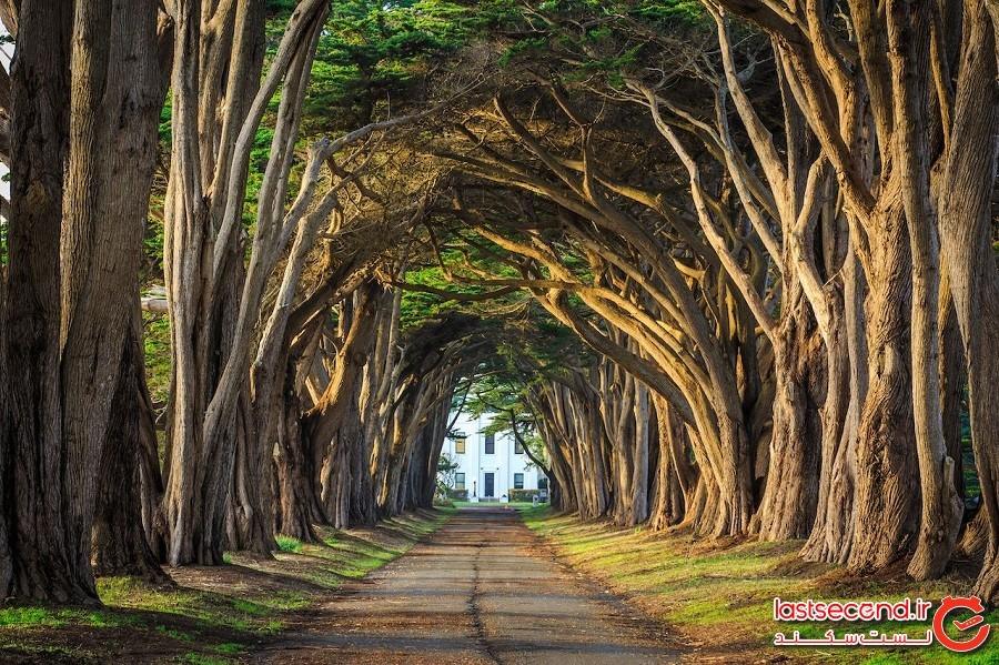 تونل درخت سرو – ایالت کالیفرنیا کشور آمریکا
