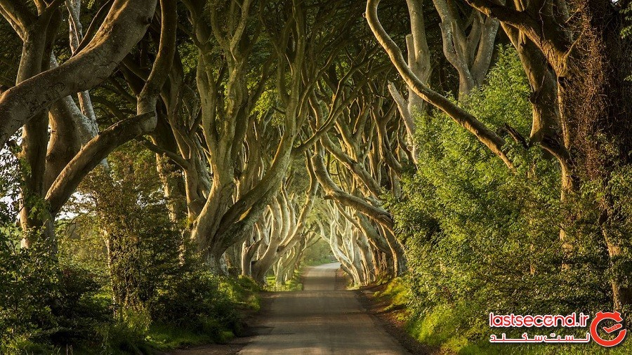 پرچینهای تاریک – ایرلند شمالی