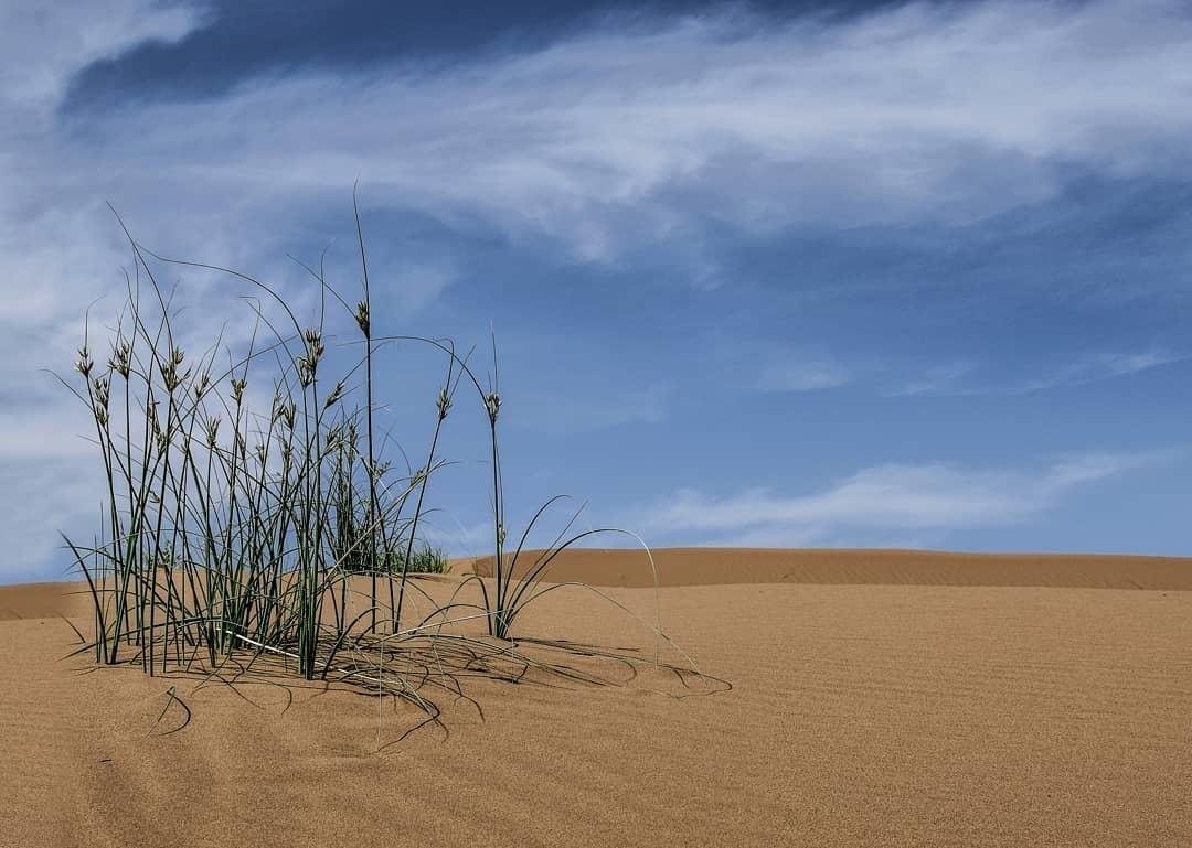 Abouzeidabad Desert