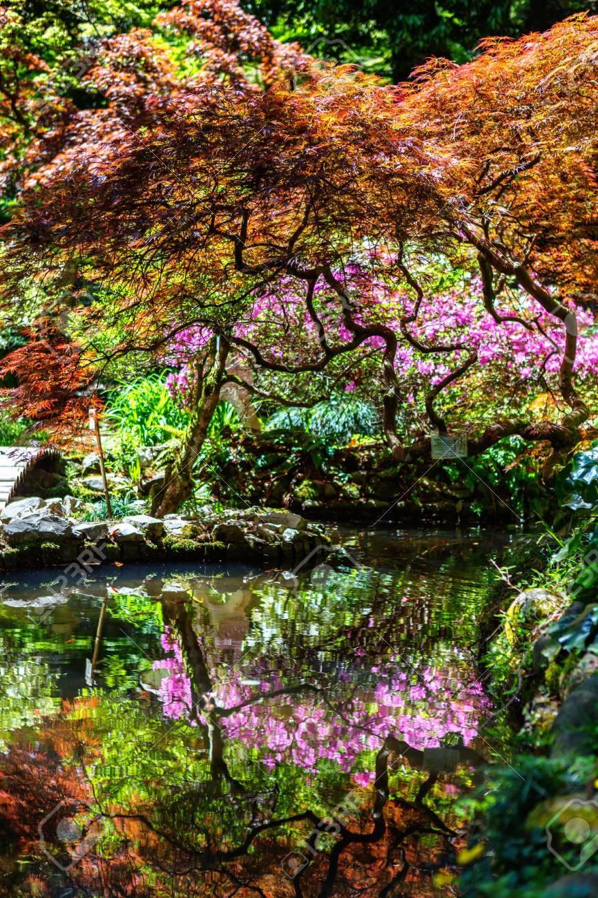 Japanese Garden Batumi (1).jpg