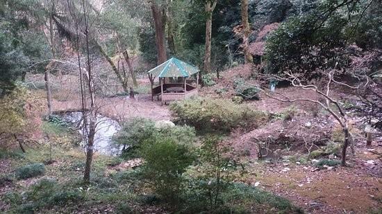 Japanese Garden Batumi (4).jpg