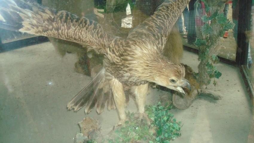 موزه حیات وحش نمک آبرود
