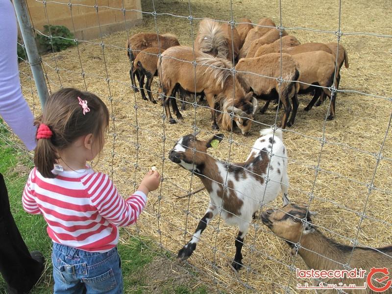 چرا نباید به حیوانات غذا بدهیم؟