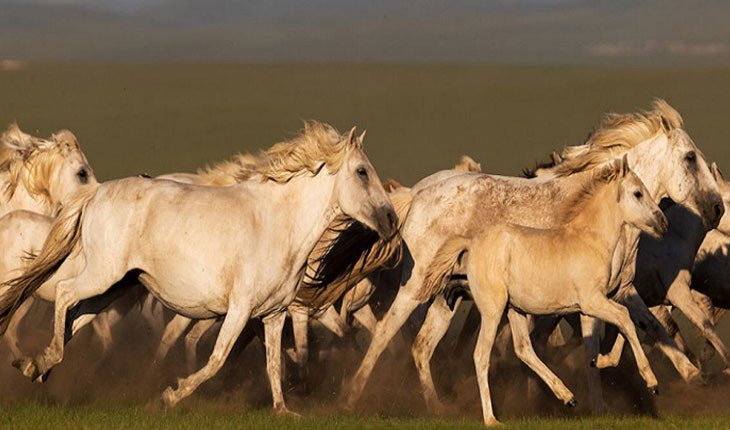 بهترین نقاط جهان برای تماشای اسب های وحشی کجا هستند؟