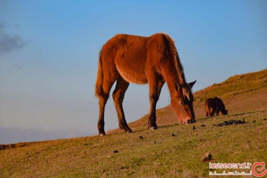 بهترین نقاط جهان برای دیدن اسبهای وحشی