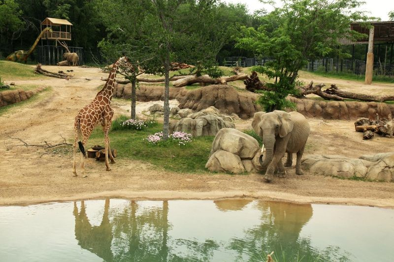 باغ وحش دالاس