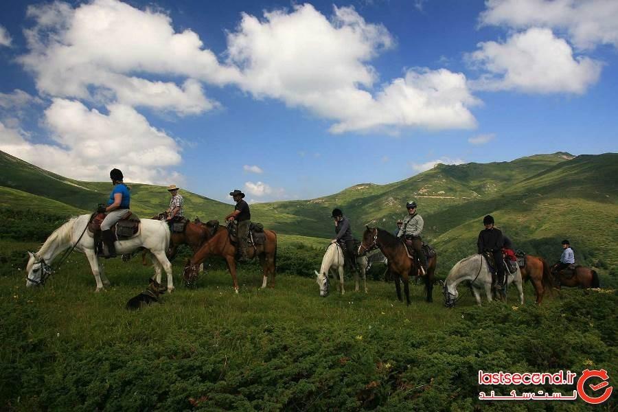 بهترین نقاط جهان برای دیدن اسب های وحشی کجا هستند؟