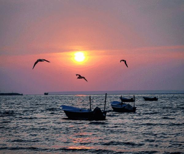 Pazm Gulf (1).png