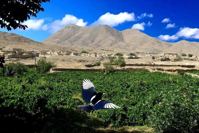 روستای حسین آباد