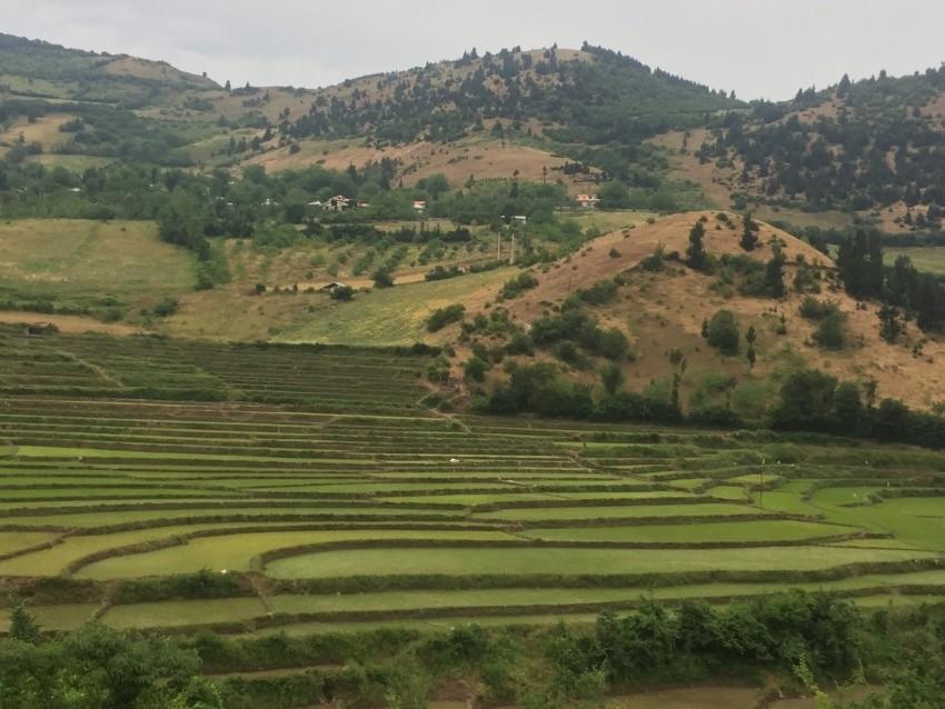 Sendes Village Rice Field