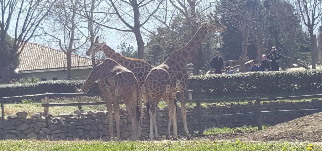 Bursa Zoo