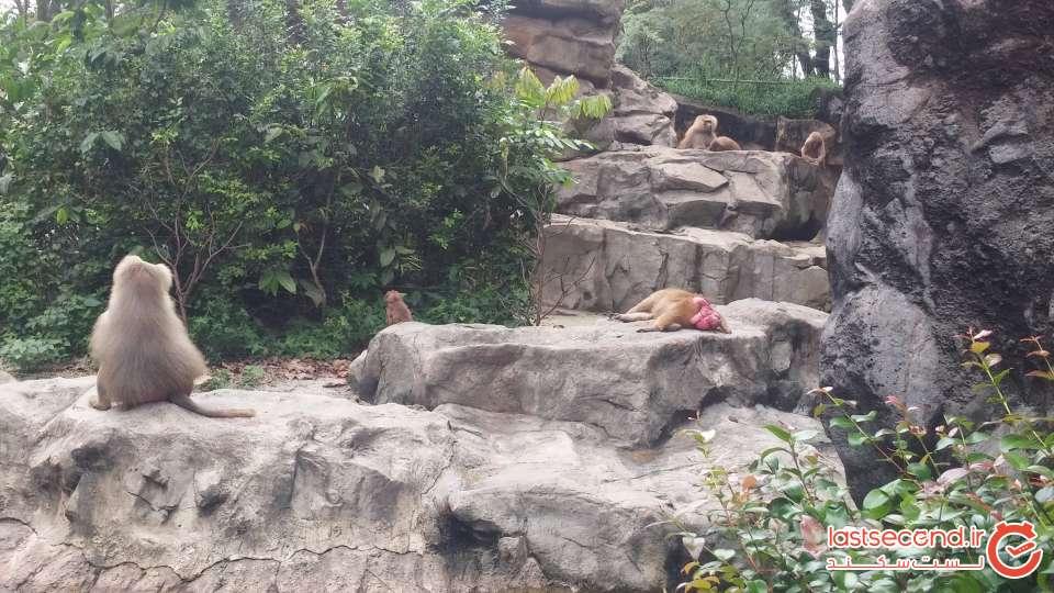 35-تصاویر باغ وحش سنگاپور (3).jpg