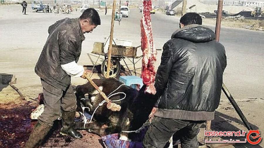 خوردن 8 حیوان زنده در چین