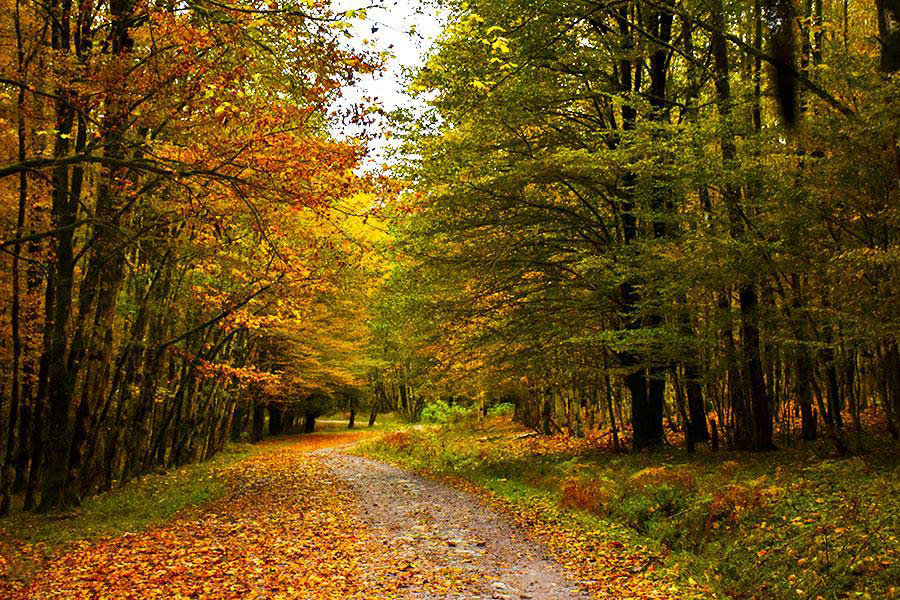 جنگل سنگده، بهشتی در قلب مازندران