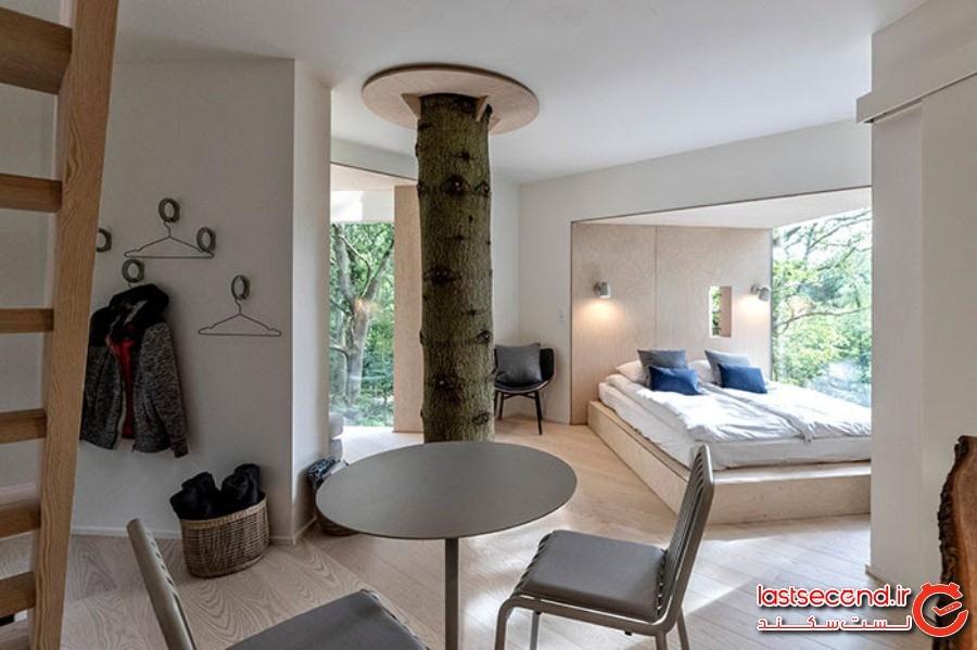 یک هتل، به سبک خانه درختی، که برای مهمانان ماجراجو، آماده شده است