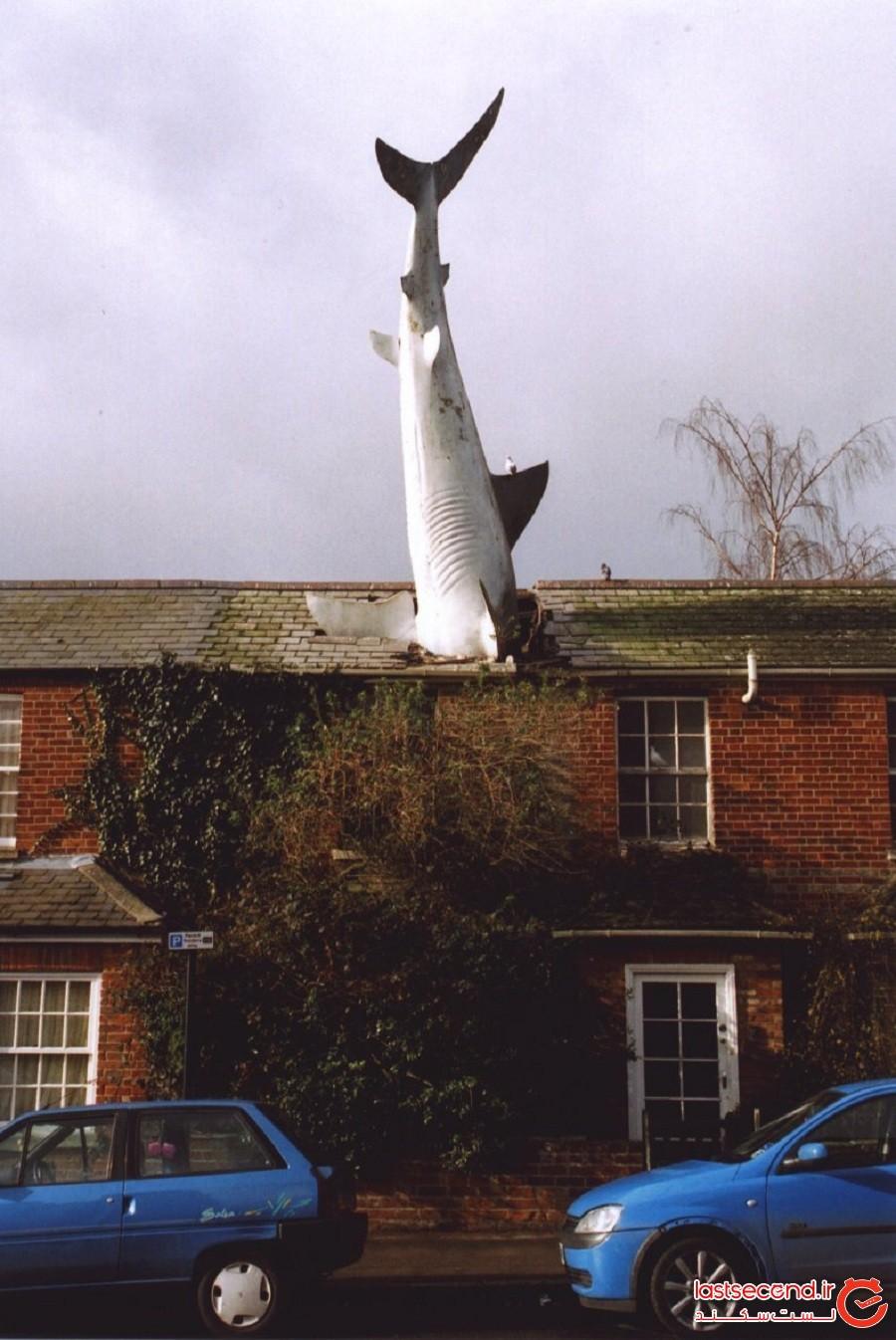 کوسه هادینگتون، شهر آکسفورد، بریتانیا
