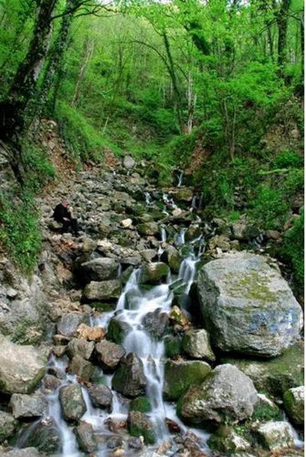 جنگل آب پری