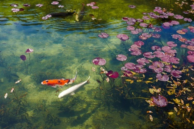 دریاچه مونه در ژاپن، نقاشی عجیبی که نمود واقعی پیدا کرد!