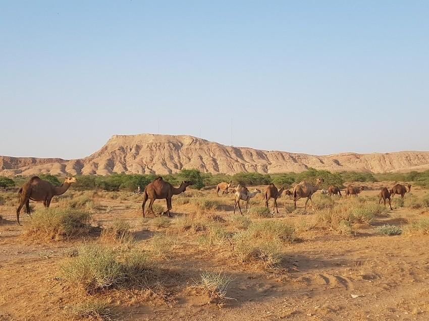 روستای ام الدبس