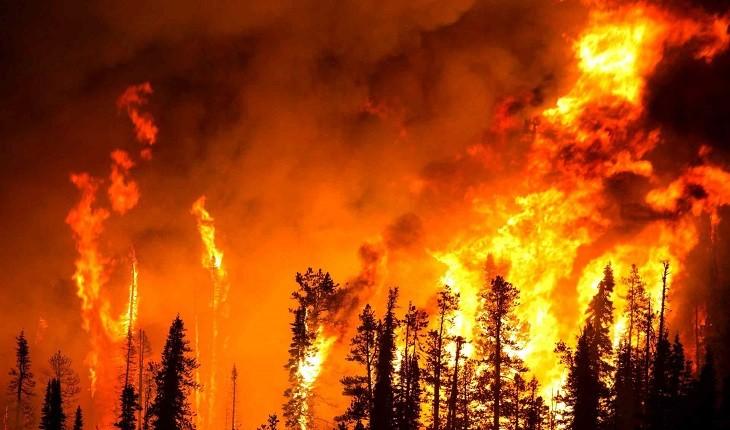 آتش در ریههای ایران و جهان، از ارسباران تا آمازون