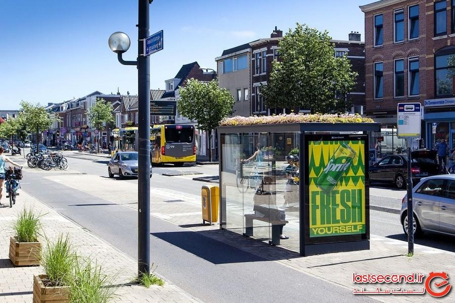 هلندیها با سقف سبز ایستگاههای اتوبوس به کمک زنبورها آمدند