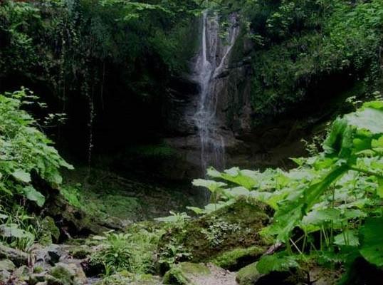 جنگل دارابلاکا