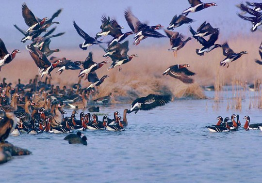 YousefKand Lagoon