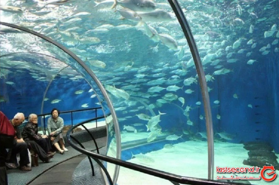 آکواریوم اقیانوس شانگهای چین (Shanghai Ocean Aquarium in China)