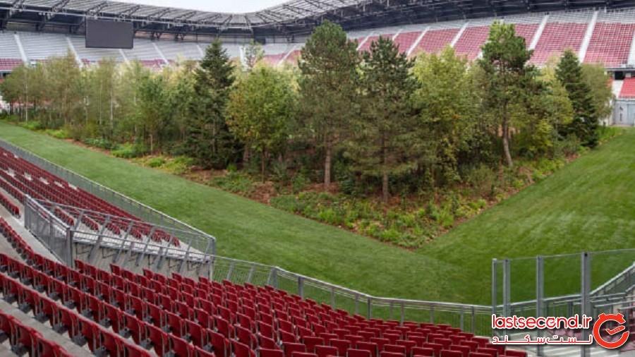 جنگلی که وسط یک استادیوم فوتبال روییده است