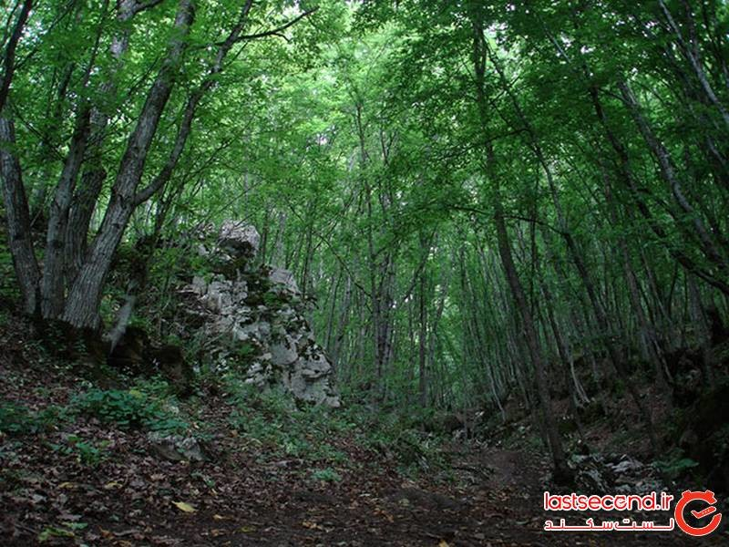 دره جنگلی مکیدی
