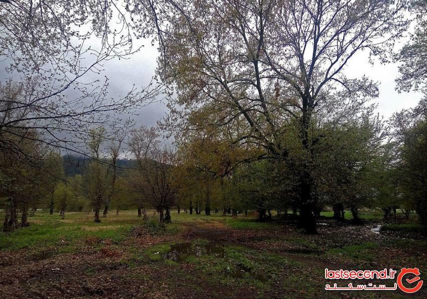 پارک جنگلی قرق گرگان