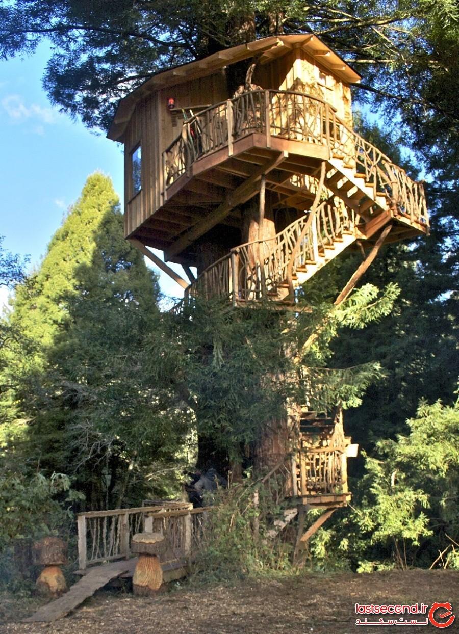 خانه درختی آرکاتا رِد وود (Arcata Redwood Treehouse)