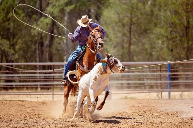 تماشای نمایش سوارکاری، تفریح یا زنده نگه داشتن فرهنگ غرب وحشی!