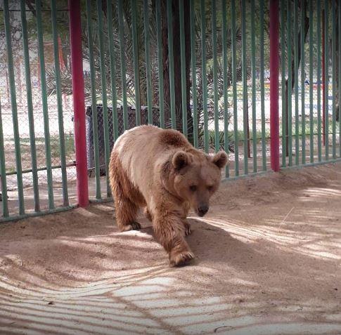 Hoveyzeh Zoo